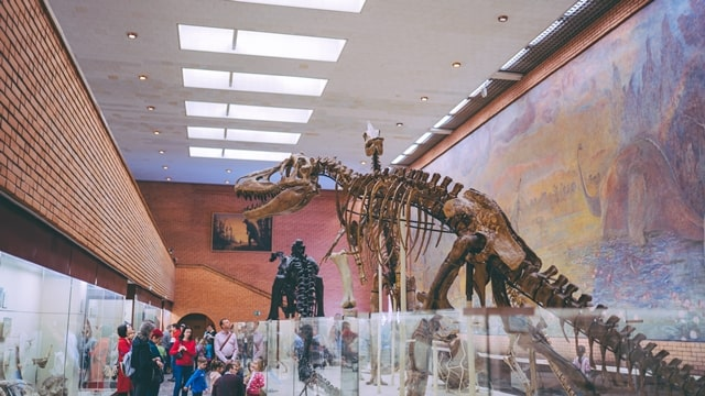 大人も無意識に恐竜へ興味をもっている画像